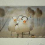 18A Timothy Bath Royal Terns Photograph